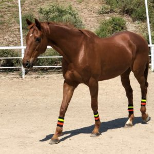 equine-safety-lights-leg-wraps-horse-safety