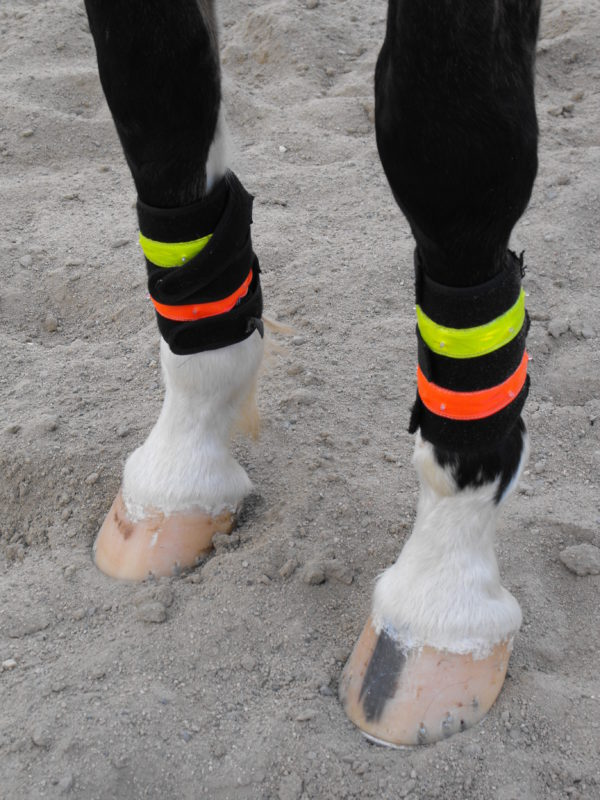 horse-safety-lights-leg-wraps-dog-safety-collars