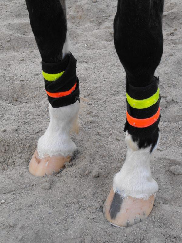 horse-safety-lights-leg-wraps-dog-safety-collars
