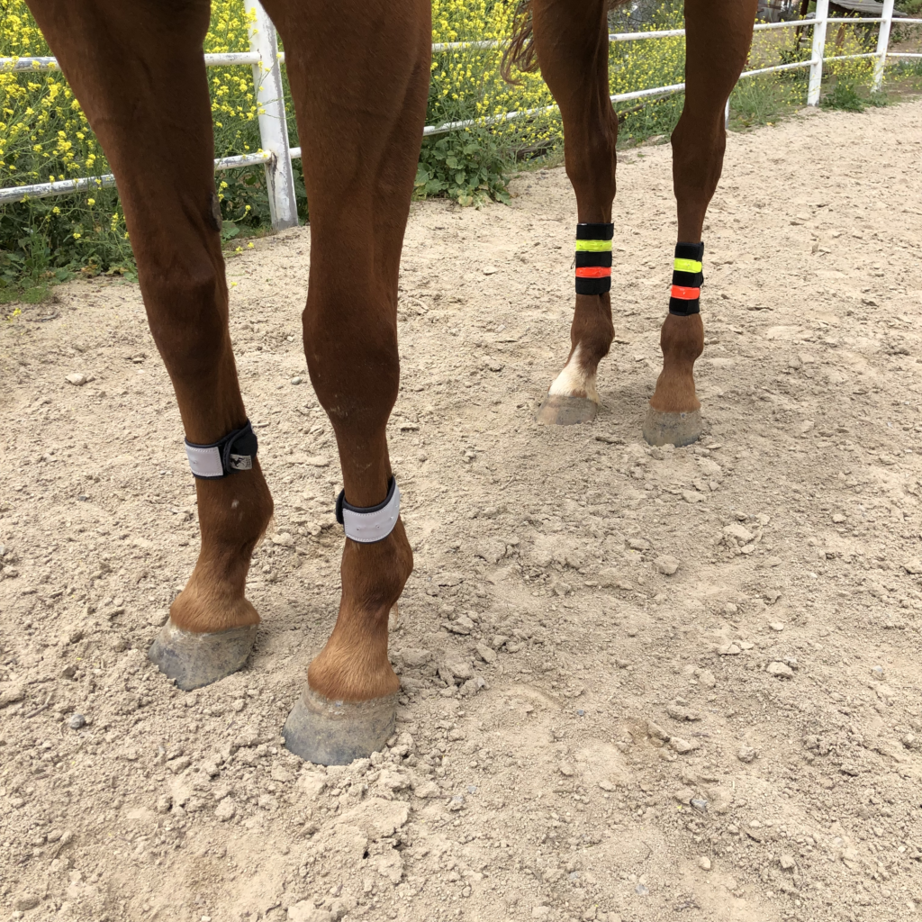 horse-safety-flashing-light-leg-wraps