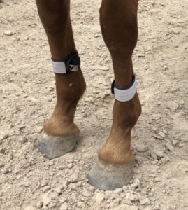 small-size-motion-activated-horse-safety-light-leg-wrap