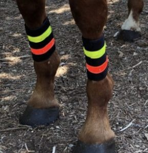large-horse-safety-led-light-wrap-leg-motion-activated